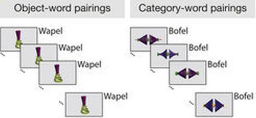 Βρέφη μαθαίνουν τι είναι «Wapel» χωρίς να κοιμηθούν. Ο εγκέφαλος των βρεφών, ωστόσο, αναγνωρίζει μόνο ποια αντικείμενα θα μπορούσαν να αποδοθούν στην κατηγορία «Bofel» μετά από ένα σύντομο ύπνο. © MPI f. Human Cognitive and Brain Sciences/ K. Flake