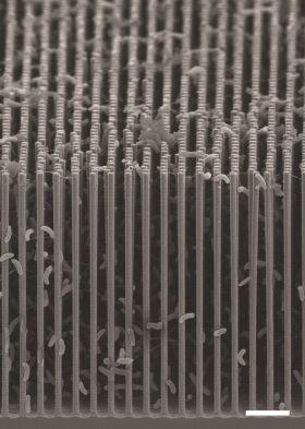 Λεπτομέρεια από τομή της περιοχής του υβριδικού συστήματος νανοσυρμάτων και βακτηρίων