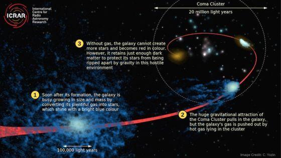 Η καλλιτεχνική αναπαράσταση της διαδικασίας του «quenching» δείχνει πώς ένας κανονικός μπλε (όπου διαμορφώνονται άστρα) γαλαξίας χάνει το αέριό του ενώ πέφτει μέσα στο Σμήνος Κώμη πολύ νωρίτερα από τη διαμόρφωσή του. Credit: Cameron Yozin, ICRAR/UWA