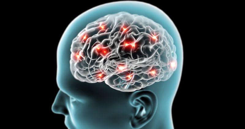 Εγκέφαλος – Μνήμη: Ένα χημικό σήμα σε όλο τον εγκέφαλο που ενισχύει τη μνήμη