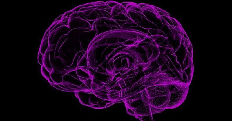 Εγκέφαλος: Αναγνωρίστηκαν οι νευρώνες που ελέγχουν το σωματικό ρολόι του εγκεφάλου