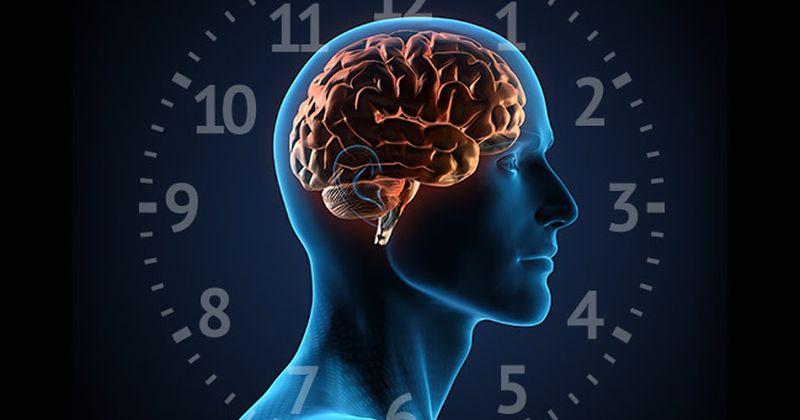 Οι κιρκάδιοι ρυθμοί και ο εγκέφαλος: μερικές τελευταίες εξελίξεις από τις έρευνες