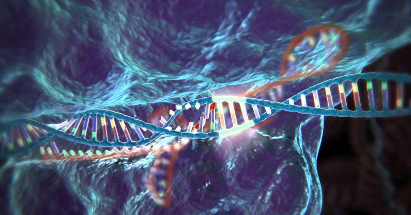 Η τεχνική CRISPR/Cas-9 ενδέχεται να είναι υπεύθυνη για ανησυχητικές βλάβες στο DNA