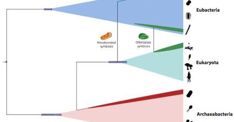 Ένα χρονοδιάγραμμα για την προέλευση και εξέλιξη της όλης ζωής στη Γη