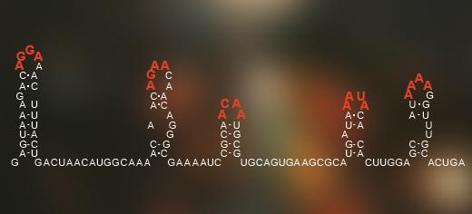 Ένας κώδικας, κρυμμένος στην διευθέτηση της γενετικής πληροφορίας των ιών RNA, «λέει» στον ιό πως θα δράσει στο εξωτερικό κέλυφος των πρωτεϊνών.  Credit: Image courtesy of University of Leeds