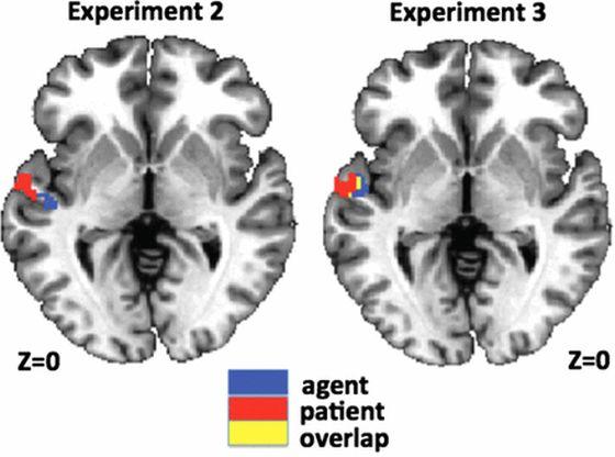 Στην εικόνα (από την εργασία) φαίνονται καταγραφές από δυο πειράματα και προσδιορίζονται περιοχές στις οποίες κωδικοποιούνται οι μεταβλητές «συντελεστής» και «πάσχων».