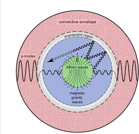 Μαγνητικό Φαινόμενο Θερμοκηπίου στο εσωτερικό κόκκινου γίγαντα. Σχηματική αναπαράσταση. (Fuller & Cantiello et al. 2015)