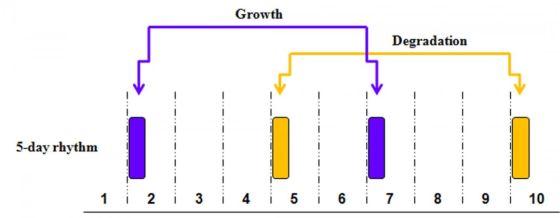 20160107_5-day growth rhythm560
