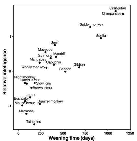Συσχετισμός μεταξύ του χρόνου απογαλακτισμού και της ευφυΐας για τα πρωτεύοντα είδη (Από την εργασία)