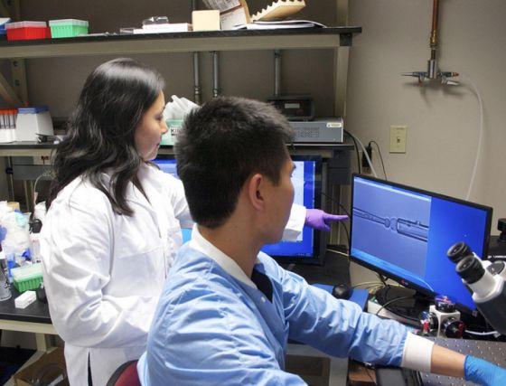 Η επίκουρος καθηγήτρια Jenny Jiang που μαζί με την ομάδα της ανακάλυψε το iTAST, τη νέα μέθοδο για τη μελέτη των Τ-κυττάρων. (πηγή: Cockrell School of Engineering)