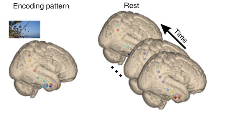 Πώς ο εγκέφαλος μαθαίνει κατά τη διάρκεια του ύπνου