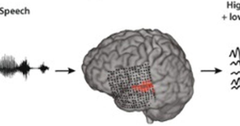Επιστήμονες δημιούργησαν το πρώτο σύστημα που μεταφράζει άμεσα τα εγκεφαλικά σήματα της σκέψης σε ομιλία