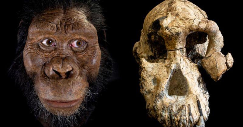 Ένα πρόσωπο για τον πρόγονο της Lucy – Το πρόσωπο του αρχαιότερου συγγενή του ανθρώπου;