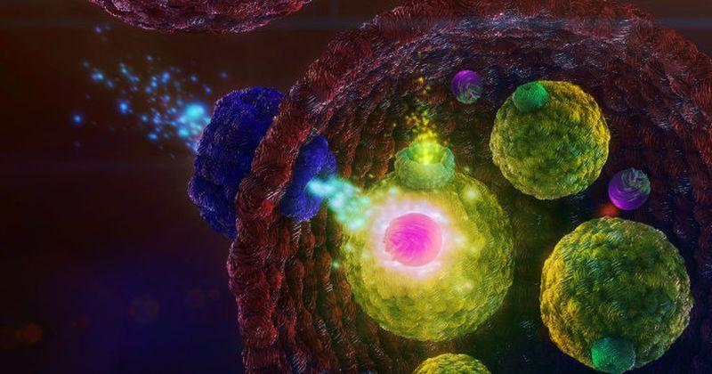 Το βιολογικό κύτταρο ως χημικός αισθητήρας – επιστήμονες δημιούργησαν ένα πιο εκλεπτυσμένο μοντέλο