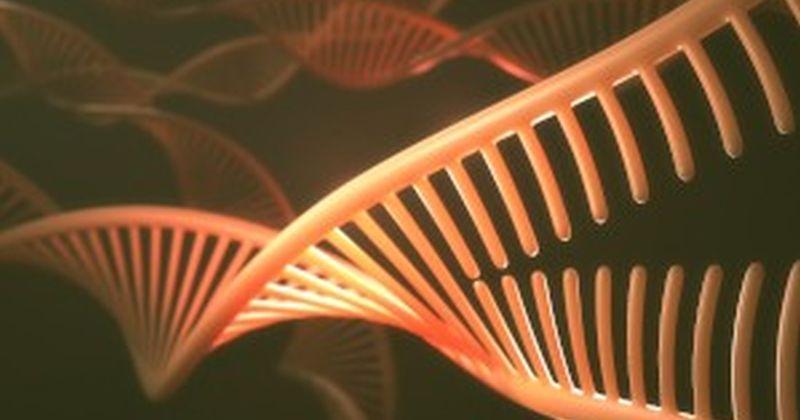 Νέα μόρια RNA μπορεί να παίζουν ρόλο στην γήρανση σύμφωνα με έρευνα επιστημόνων