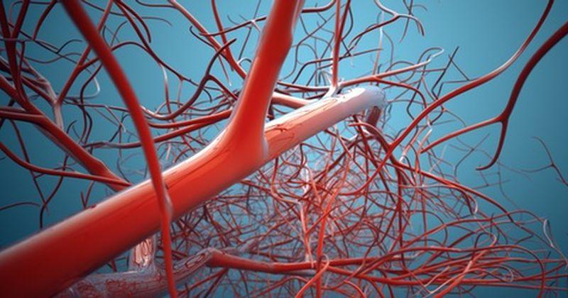 Η διαστολή των αγγείων ελέγχει τη ροή μεταβολιτών στον εγκέφαλο – αποκαλύπτει ευφυές θεωρητικό μοντέλο