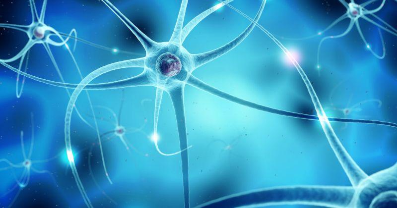 Αμυοτροφική Πλευρική Σκλήρυνση: Φλεγμονώδεις διεργασίες μπορεί να παίξουν ρόλο στην ALS