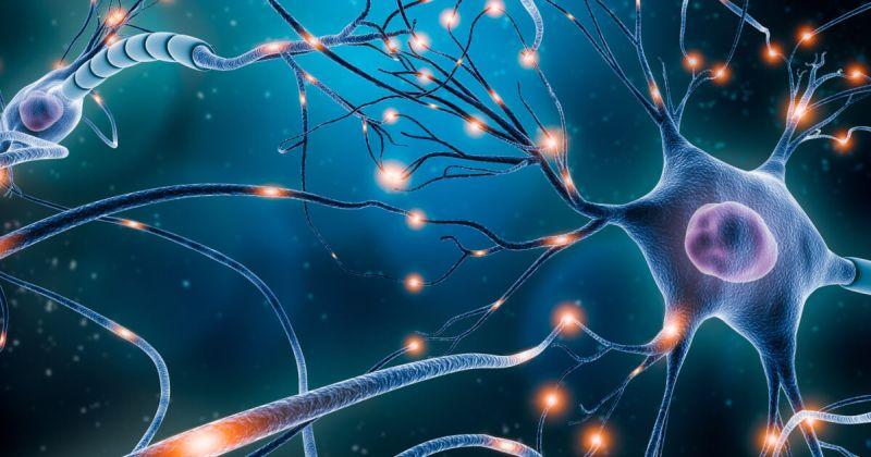 Μνήμη: Νέα μελέτη φωτίζει τον τρόπο με τον οποίο οι νευρώνες διαμορφώνουν μνήμες μακράς διάρκειας